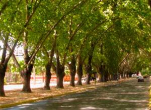 Avenida Urmeneta, Limache