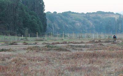 La biorremediación del suelo de una comunidad que se resiste al sacrificio
