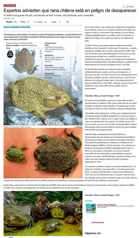 Expertos advierten que rana chilena está en peligro de desaparecer